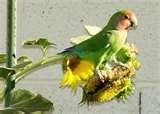 Bird Feeders Phoenix Area pictures
