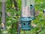 images of Bird Feeders Olympia Wa
