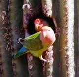 Bird Feeders Phoenix Area