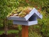 Bird Feeder Elementary pictures