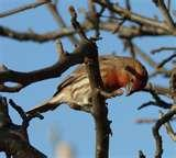 pictures of Bird Feeders North Carolina