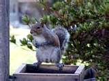 Bird Feeders Squirrel Free photos