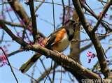 Bird Feeders North Carolina