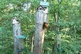 Bird Feeders North Carolina photos