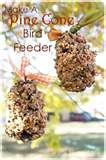 pictures of Bird Feeder Elementary