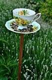 photos of Bird Feeder Teacup