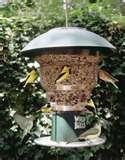 Bird Feeders Squirrel Free images