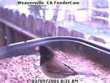 Bird Feeder Elementary photos