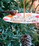 photos of Bird Feeder Rig