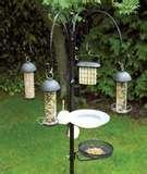 Bird Feeder Jackdaws pictures