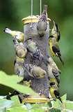 Bird Feeder Options pictures