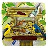 images of Bird Feeder Varieties