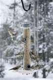 photos of Bird Feeders Up