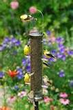 Bird Feeders Up