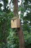 Bird Feeders Bangalore photos