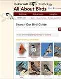 Bird Feeders Tucson Arizona images
