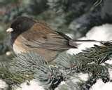 images of Bird Feeders Oregon