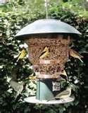 Bird Feeder Circuit pictures