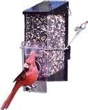photos of Bird Feeders Tucson Arizona