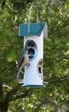 Bird Feeder Against Squirrels pictures