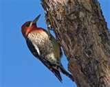Bird Feeders Tucson Arizona pictures