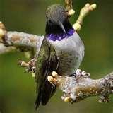 Bird Feeders Oregon