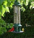 photos of Bird Feeder Against Squirrels