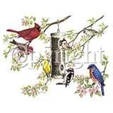 pictures of Bird Feeder Phoenix