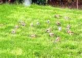 Bird Feeder Niger Uk photos