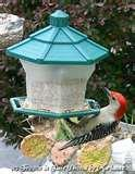 Bird Feeders National Geographic images