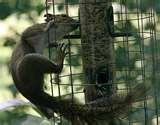 Do Caged Bird Feeders Work images