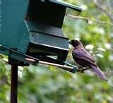 Do Caged Bird Feeders Work photos