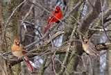 photos of Bird Feeders Louisville