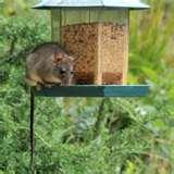 Bird Feeder Catch Tray