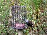 Bird Feeder Good photos