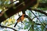 Bird Feeders Halifax images