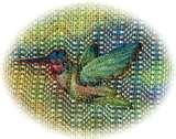 Bird Seed Ornament pictures