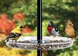 images of Bird Feeder Catch Tray