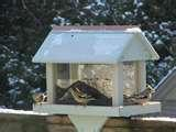 What Bird Feeders Do Birds Like images