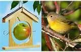 Bird Feeders Apple Shaped photos