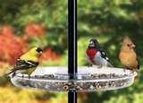 What Bird Feeders Do Birds Like photos