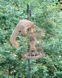 pictures of Squirrel Proof Bird Feeders Diy