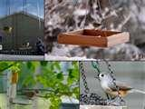 images of Bird Feeders No Birds