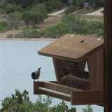 Bird Feeders Building photos