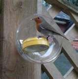 images of Squirrel Proof Bird Feeders Diy