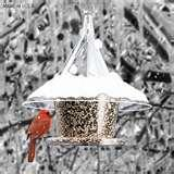 What Bird Feeders Do Birds Like pictures