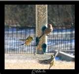Bird Feeders Job Lot images