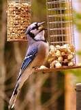 pictures of Bird Feeders Unlimited Store