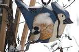 pictures of Bird Feeders New Brunswick
