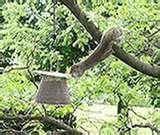 Squirrel Proof Bird Feeders Roller